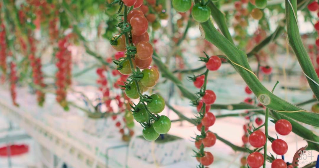 腾讯番茄.png